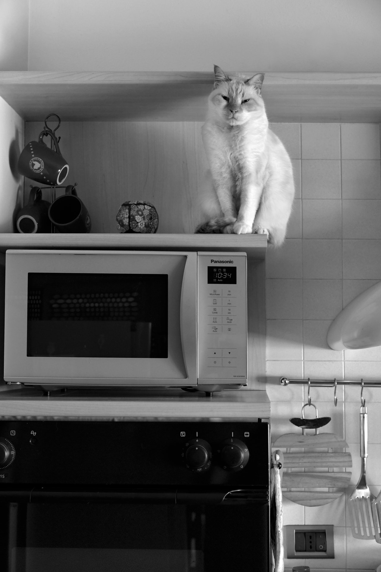 Guides for purchasing and taking care of your microwave