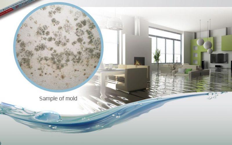 Mold Resistance Gypsum Board MoldBloc